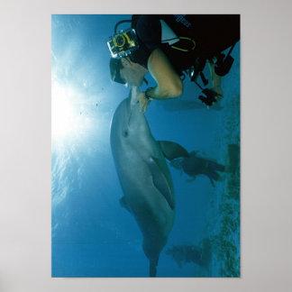 Beso de los delfínes póster