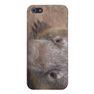 Beso de Wombat iPhone 5 Carcasas