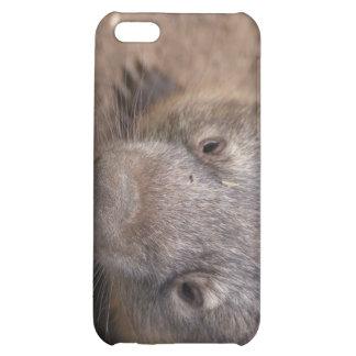 Beso de Wombat