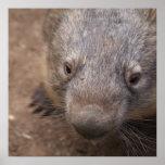 Beso de Wombat Poster