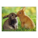 Beso del conejito felicitaciones