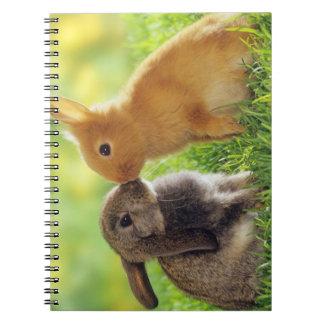 Beso del conejito libros de apuntes con espiral