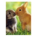 Beso del conejito tarjeta postal