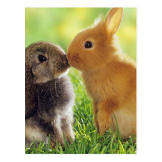 Beso del conejito tarjetas postales