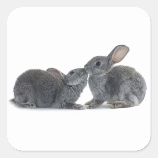 Beso del conejo colcomanias cuadradas personalizadas