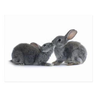 Beso del conejo postales