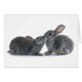 Beso del conejo tarjeta de felicitación