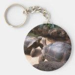 Beso gigante de la tortuga llaveros