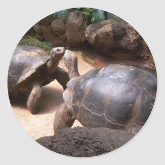 Beso gigante de la tortuga pegatina redonda