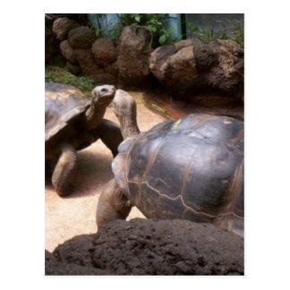 Beso gigante de la tortuga tarjetas postales