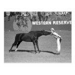 Beso grande del caballo, 1940 postal