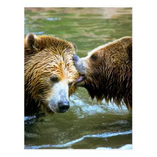 Beso grande del oso grizzly postal