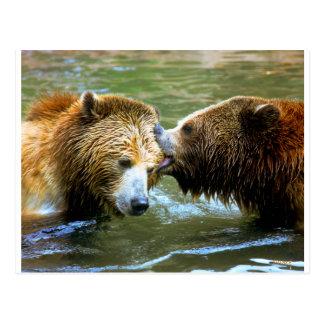 Beso grande del oso grizzly tarjetas postales