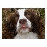 Beso - tarjeta de felicitación del perro de aguas