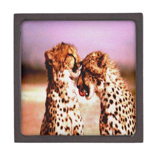 beso y amor del guepardo caja de joyas de calidad