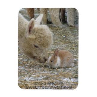 ¡Besos de la alpaca y del conejito! Imán De Vinilo