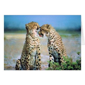 Besos del guepardo tarjeta de felicitación