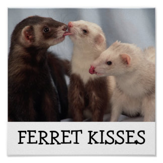 Besos del hurón posters