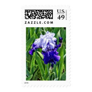 Best Bet Iris Stamps