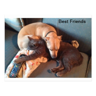 Best Buddies Postcard