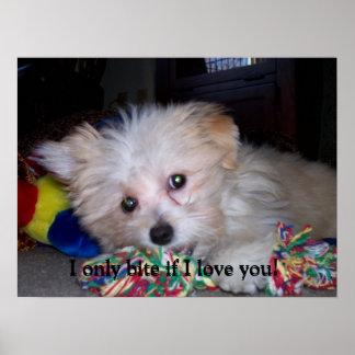 Best Dog Ever Poster