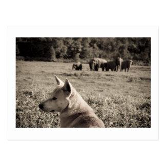 Best Frieds - Dog & Elephants Postcard