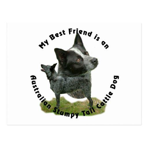 Best Friend Australian Stumpy Tail Post Cards