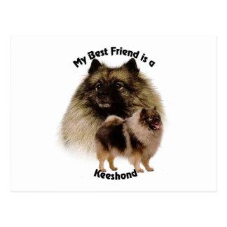 Best Friend Keeshond Postcard