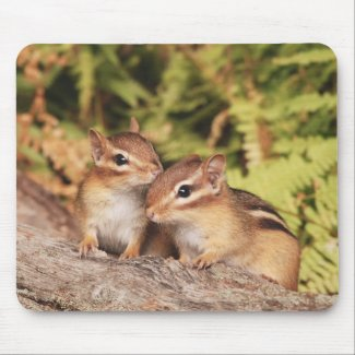 Best Friends Baby Chipmunks Mouse Pad