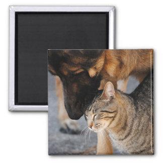 Best Friends- Cat & German Shepherd  Magnet