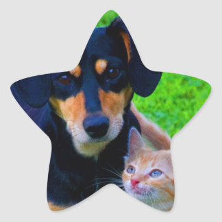 Best friends dog cat difference is no problem star sticker