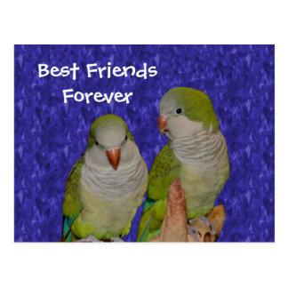 Best Friends Forever Cute Birds Postcard