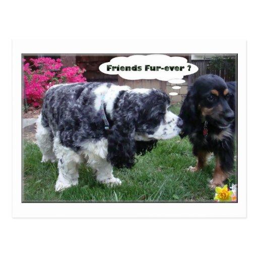 Best Friends Fur-ever Post Card