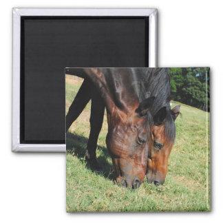 Best Friends-Horse Photo Magnet