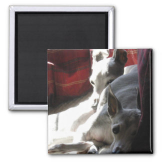 """Best Friends"" italian greyhound photo 2 Inch Square Magnet"