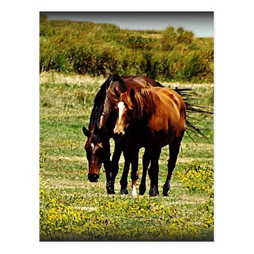 """Best Friends"" - Pair of Horses Postcard"