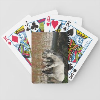 Best Friends photo by Ann Finster Bicycle Playing Cards