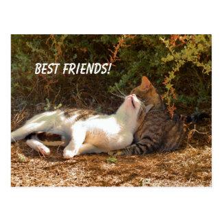Best Friends - Postcard