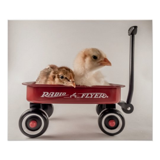 Best Friends Together Cute Chicks in Red Wagon Poster