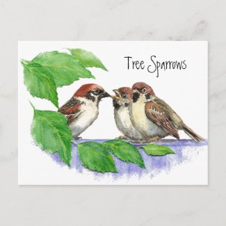 Best Mom Ever Sparrow Family postcard