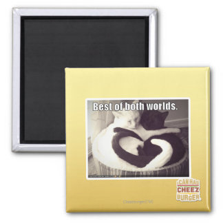 Best of both worlds. 2 inch square magnet