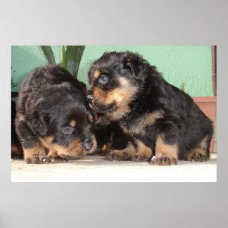 bestRottweiler Puppies Best Friends Forever Poster