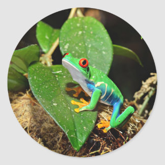 Bestselling Frog Themed Classic Round Sticker
