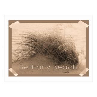 Bethany Grass Postcard