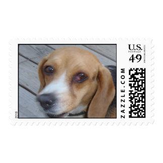 Betsy el sello del beagle
