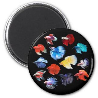 Betta 2 Inch Round Magnet