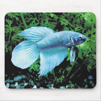 betta and cobalt blue mouse pad