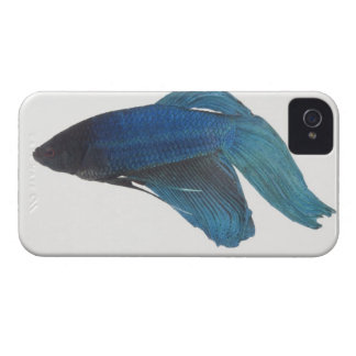 Betta Fish or Male Blue Siamese Fighting Fish iPhone 4 Cover