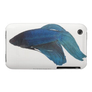 Betta Fish or Male Blue Siamese Fighting Fish iPhone 3 Case