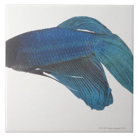 Betta Fish or Male Blue Siamese Fighting Fish Ceramic Tile